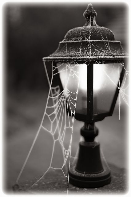The intricate yet subtle tapestry of a spiders web brings nuance to everything.      ~Charlotte (PixieWinksFairyWhispers)