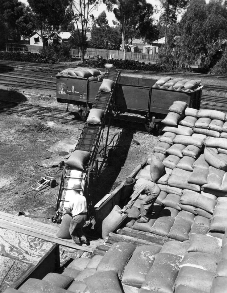Wheat loading at Wycheproof railway siding, taken by the State Rivers & Water Supply Commission., February 1957.