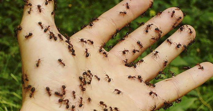 Cómo crear tú mismo un repelente de hormigas completamente natural  Lo que necesitarás:    15-30 gotas de aceite esencial de menta  15-30 gotas de aceite esencial de clavo  4-5 cucharadas de agua  Una botella con spray