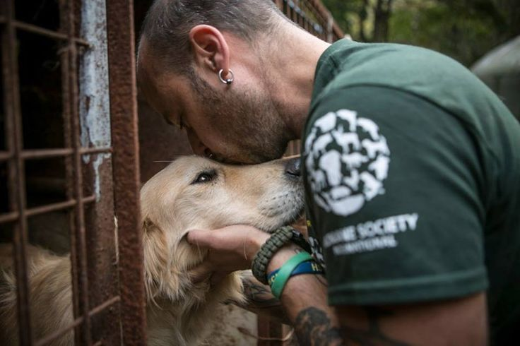 The Animal Rescue Team from Humane Society International (HSI) has begun its preparation to remove more than 170 dogs from a place that seemed inescapable – a dog meat farm.