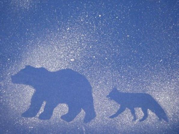 Arctic Animal splatter art using winter animal die cuts. Place cutouts of…