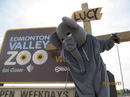 Image result for lucy edmonton valley zoo elephant