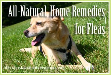 Natural Home Remedies For Fleas