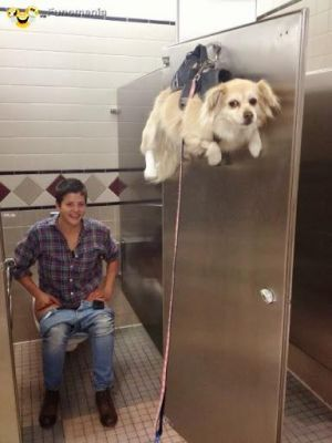dont worry smile - always together #dog #toilet #wc #pet - Funomenia