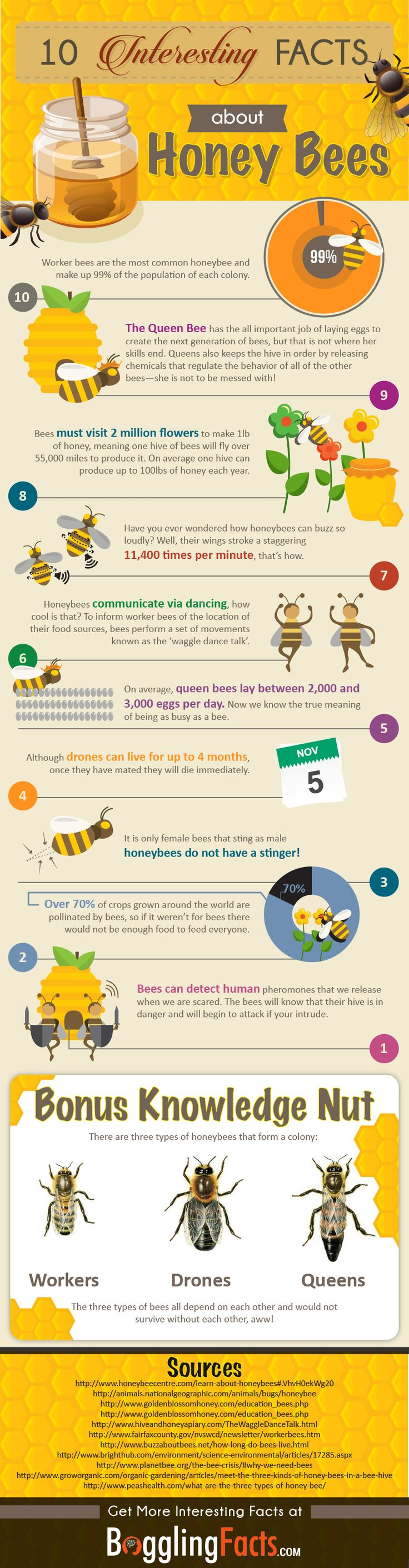 This infographic from BogglingFacts features 10 fascinating Honey Bee facts you didn't know including the hierarchy of a honey bee hive. It details the physical characteristics of the bee, shows the component parts of honey and products that the bees make in the hive and much more. More
