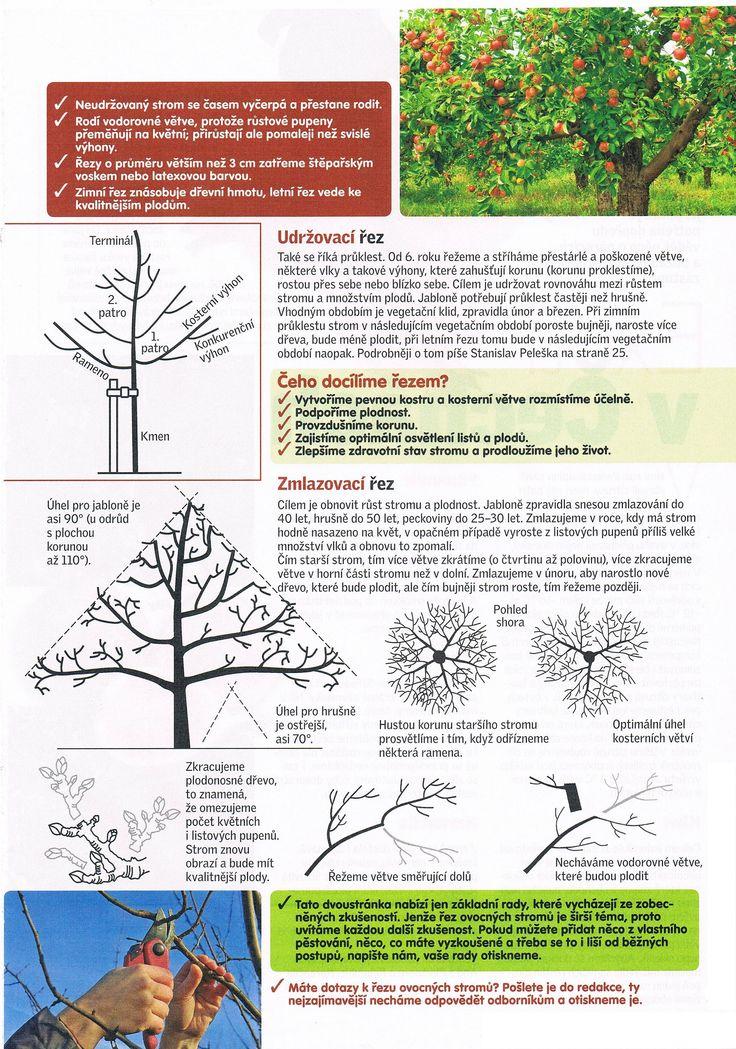 Prořezávání stromů 2