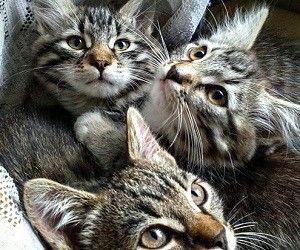 Эксперты в очередной раз расскзали, какие породы кошек лечат различные человеческие заболевания.
