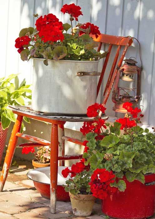 A variety of Geraniums have been planted already in my back courtyard! I like the colour combo here with the red chair and also the different pots. Cute! ;)
