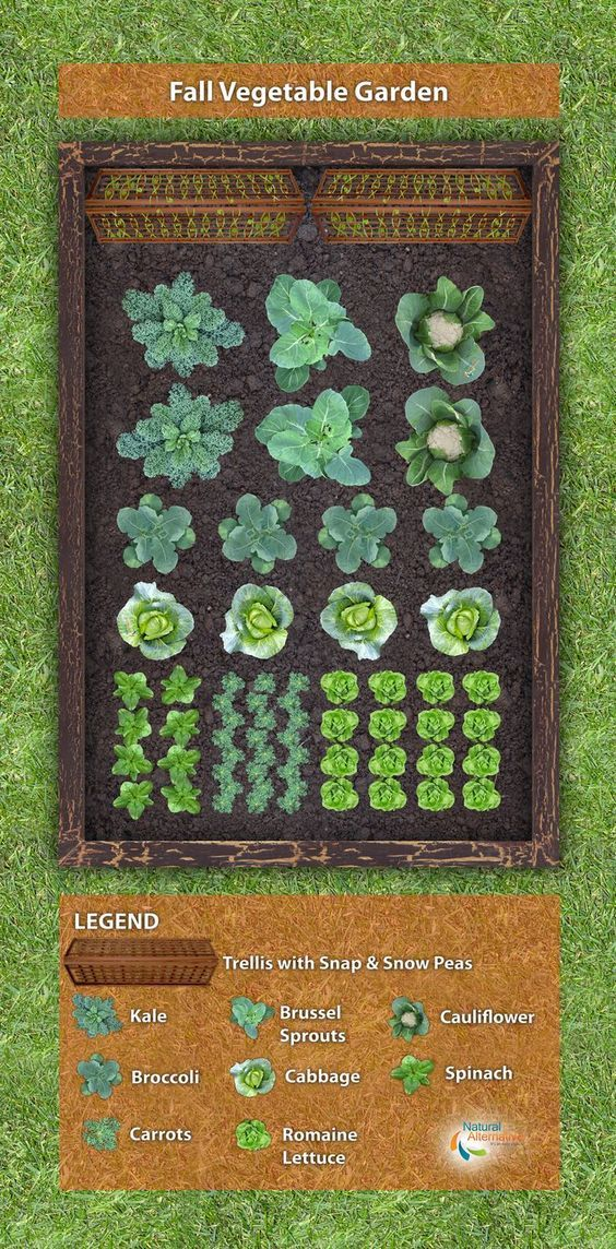 Here's a simple fall vegetable plant-a-gram, or garden plan, to help produce healthy greens. *** For more information, visit image link. #Gardening