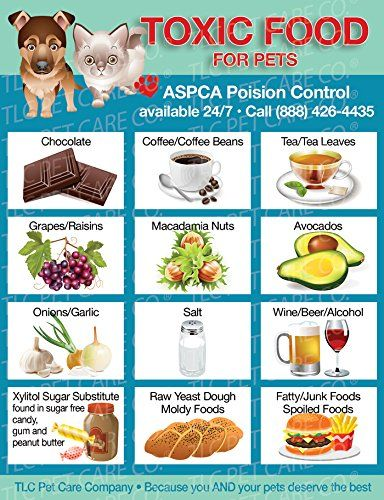 TOXIC FOODS Poison for Pets Dogs Cats Emergency ICE Home Alone Refrigerator Magnet (Qty. 1