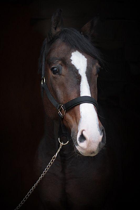 Jackpott Quadriga Dressurpferde - Verkauf von Dressurpferden, Prämienstuten und…