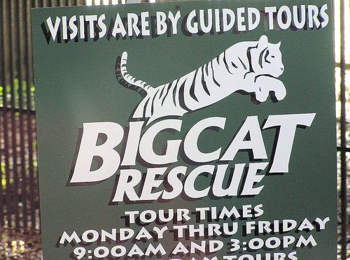 59 best big cat rescue images on pinterest big cat rescue big bigcatrescuelogo recent photos the commons getty collection galleries world gumiabroncs Gallery