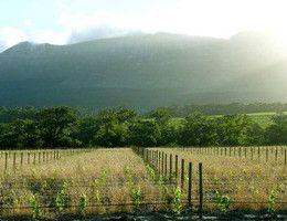 Groot Constantia Wine Estate, Cape Town