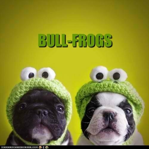 Yup. They know they're cute too.: French Bulldogs, Funny Dogs, Dogs Costumes, Crochet Hats, Bad Puns, Super Mario, Boston Terriers, Frogs, Animal