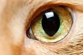 """Képtalálat a következőre: """"házimacska szeme"""""""