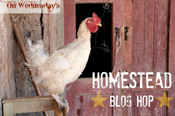 Homestead Blog Hop Every Wednesday! Join the fun and link up your blog posts on real food recipes, natural remedies, essential oils, farm life, DIYs, plus!