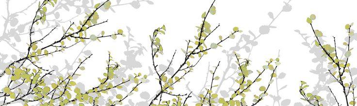 Mountain Birch Green - Fototapeter & Tapeter - Photowall