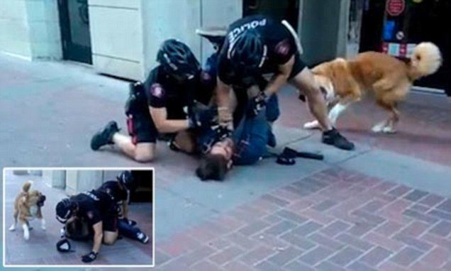Calgary Police struggle to arrest a suspect as his dog is BITING them