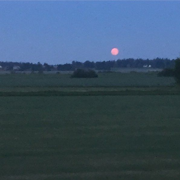 A red full moon #moon #full #red #summer #late #redsky