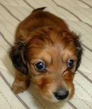 Common puppy illnesses and illness symptoms.