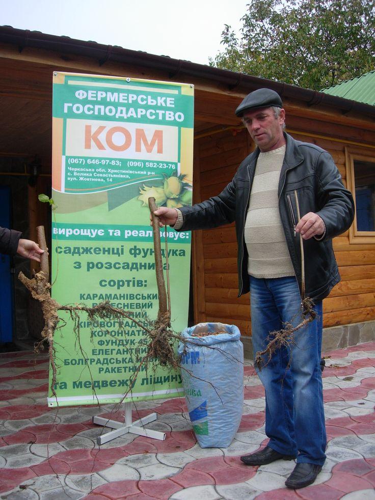 Фундук Александра Космидайло охраняют грызуны сони лесные