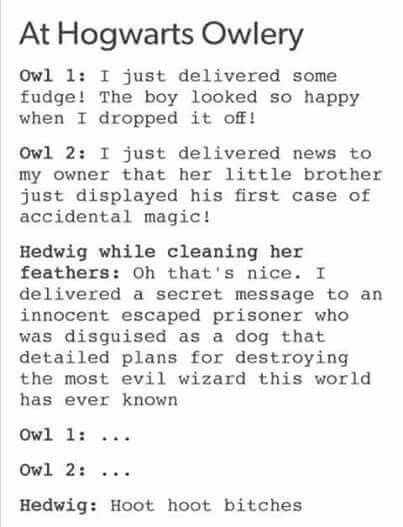 Meanwhile, Hedwig...