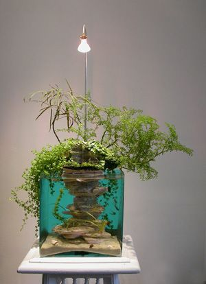 French Aquaponics Art
