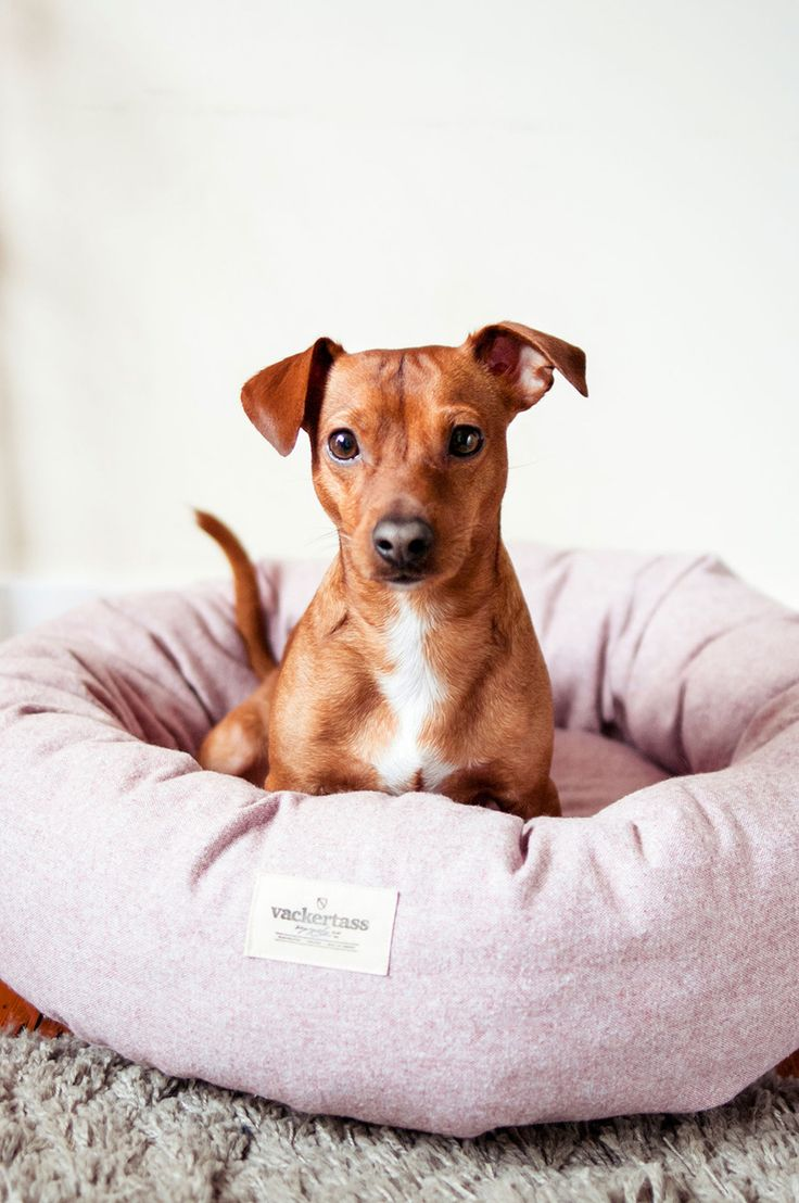 NEW! Vackertass means 'pretty paw' in Swedish, and this contemporary new brand for modern dogs certainly lives up to its name. Check out this collection in the shop now: http://www.store.styletails.com/collections/vackertass-supply-co