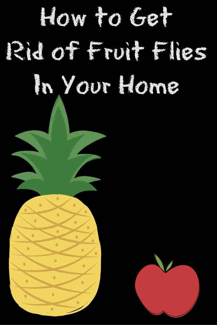 best 25 fruit flies in house ideas on pinterest fruit flies