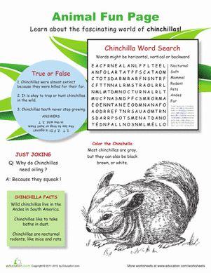 chinchilla fun facts fourth grade chinchilla fun facts fun worksheets. Black Bedroom Furniture Sets. Home Design Ideas