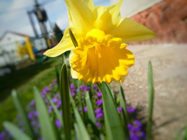 #yellow #flower #nature #nofilter #spring