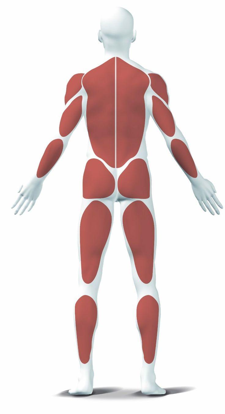 Die meisten Cardiogeräte beanspruchen hauptsächlich den Unterkörper. Beim Rudern werden jedoch rund 80% der gesamten Muskulatur beansprucht, vor allem Beine, Rücken, Schulter, Trizeps, Bizeps und Bauch. Der Bewegungsablauf ist sehr schonend für Gelenke und Bänder, da keine Stoßbelastungen auftreten. Rudergeräte eignen sich eben so für Männer, Frauen, Kinder, ältere , übergewichtige und untrainierte Personen, sowie …