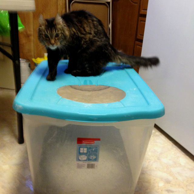 I Use A 29 Gallon Clear Rubbermaid Container For A Litter
