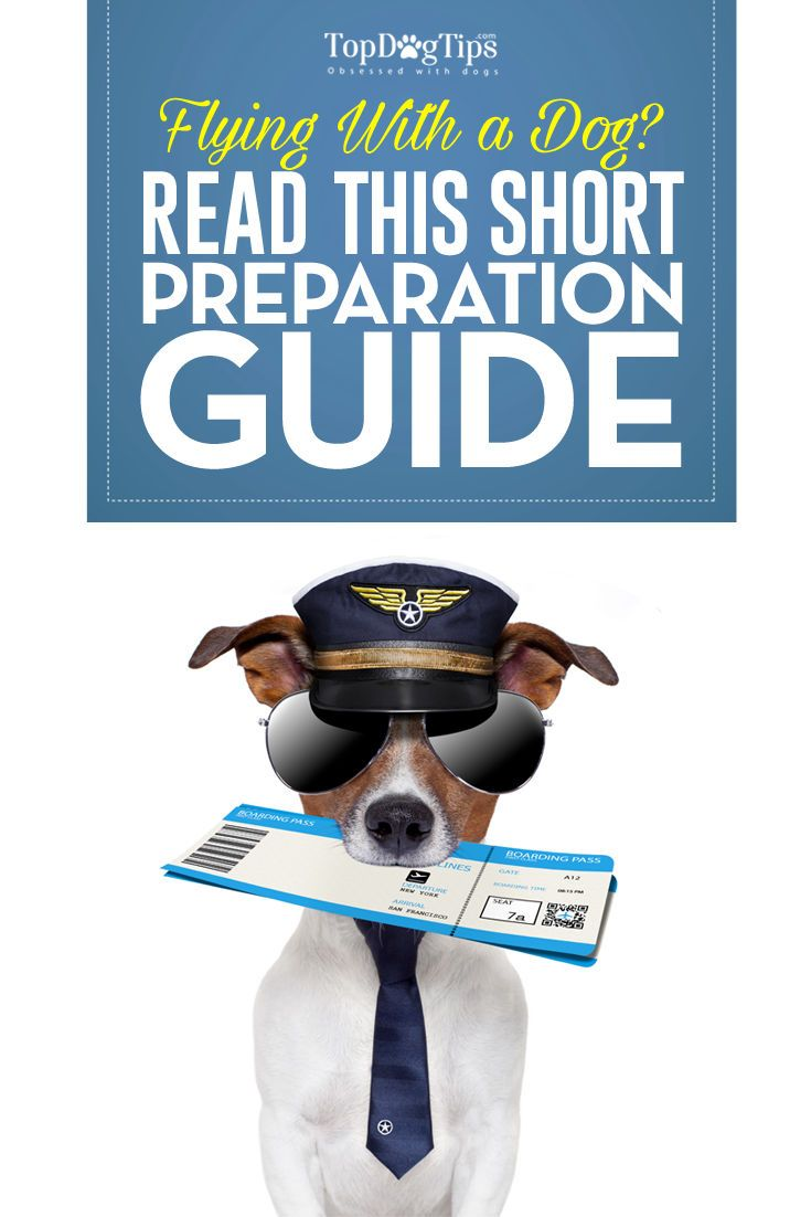 Flying With A Dog: Short Dog Travel Guide for Pet Parents. Proper preparation is an absolute must when you are flying with a dog. It may sound like an easy way to get to your destination, but flying with a dog requires particular supplies, advanced planning and organization. The first thing you'll need to do is find an airline that will allow your pet aboard a plane and ask what specific regulations they have. #dog #travel #flying #airplane #dogs #traveling #guide #how #tips