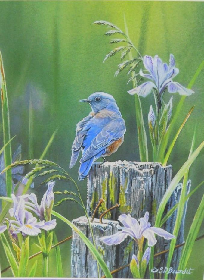 bluebird  iris  Impeccable Iris  Bird art Art Western art