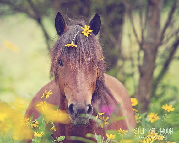 Horse Photography, Pony with flowers in mane, Girl's Room decor, Picture of Horse, Equine Art, Horse Art, Cute Pony