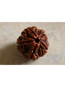 #Rudraksha – #Five #Mukhi – #Mental #Peace • Wear for #good #luck • #Mental #peace • #Learning Who should wear: #students, #teachers, #artists, #writers and #scientists Healing: #ears, #liver and #kidney and controlling #blood pressure and #diabetes
