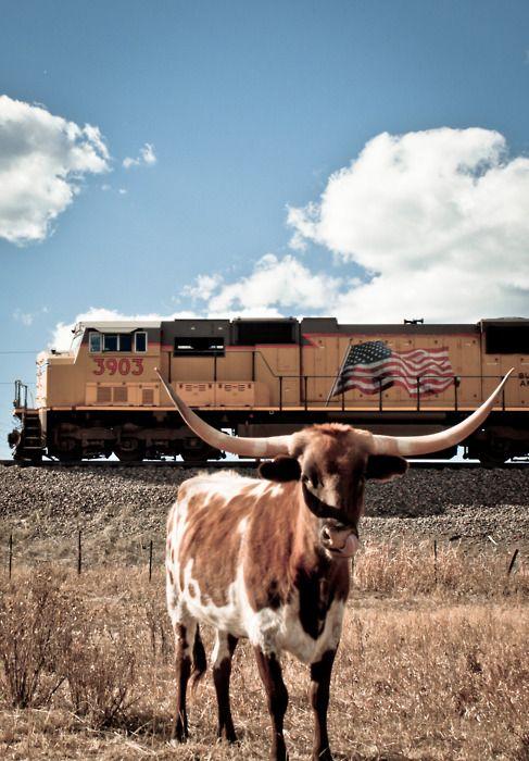 LonghornRailings, Usa Flags, American Flags, Old Texas Longhorns, Texas Training, Chicago, Union Pacific, Longhorns Salutation, Railroad Depot
