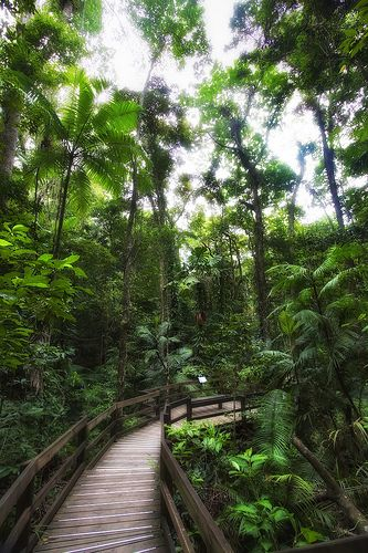 One of the places i will visit this year. DainTree Rainforest - Cairns, Australia
