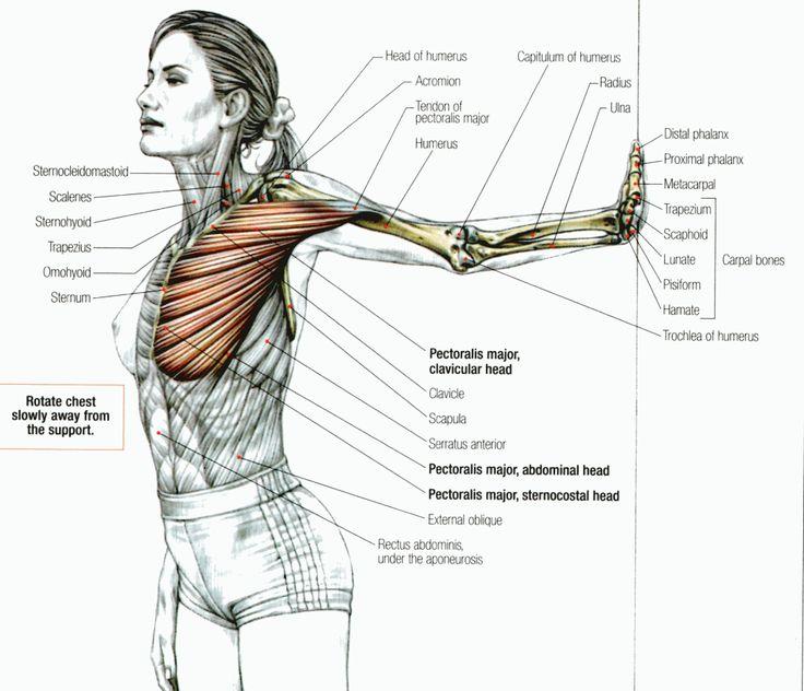 Stretch Pectoralis Major to correct forward shoulder posture