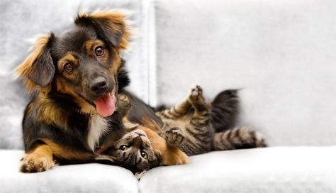 Trotz Vorurteilen kann man Hund und Katze aneinander gewöhnen, sodass sie friedlich zusammenleben. So klappt die Zusammenführung stressfrei.