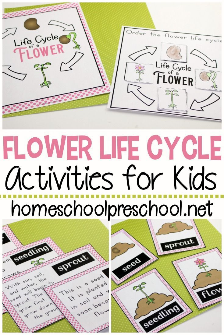 Life Cycle Of A Flower For Preschool Plant Life Cycle Life Cycles Preschool Community Helpers Preschool [ 1100 x 735 Pixel ]