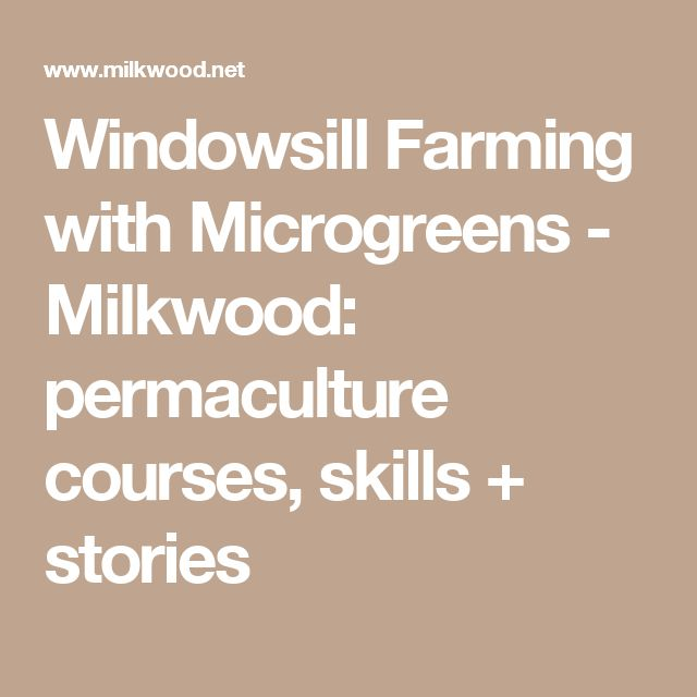 Windowsill Farming with Microgreens - Milkwood: permaculture courses, skills + stories