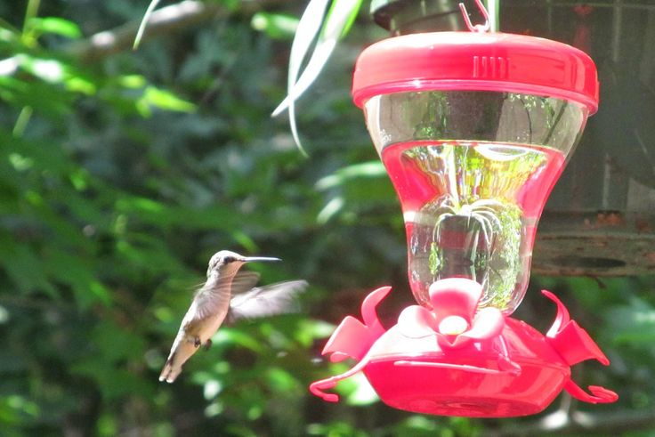 The Comfy Crafter: How to make homemade hummingbird nectar.