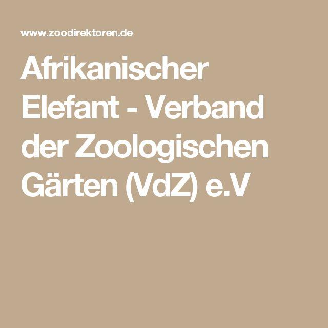 Afrikanischer Elefant - Verband der Zoologischen Gärten (VdZ) e.V