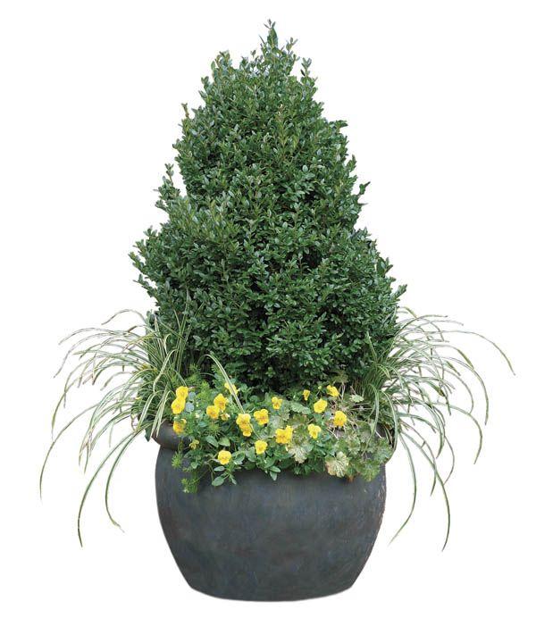 Small Evergreen Shrubs For Pots: Best 25+ Winter Container Gardening Ideas On Pinterest