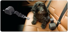 AllSafe Click and Go dog seat belt is a cut above other dog safety devices.  Locks in place in the event of an accident. Crash tested