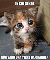 Risultati immagini per i gatti conquisteranno il mondo