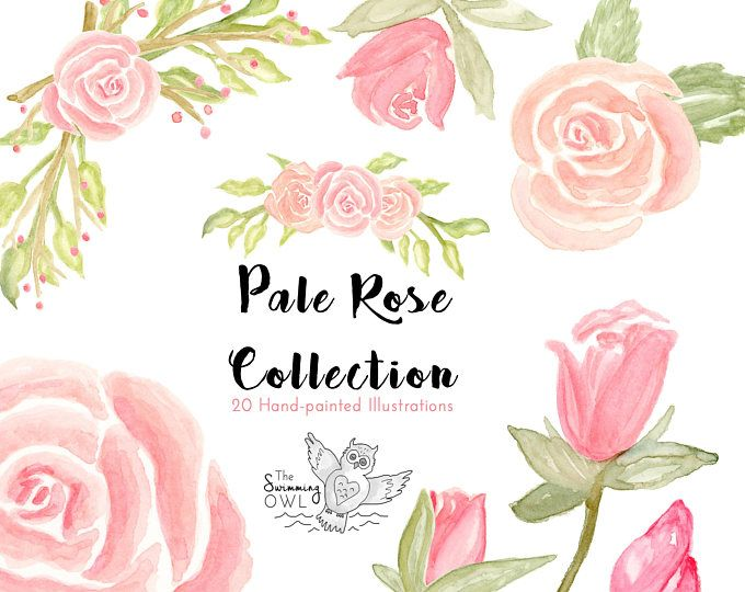 Pink Rose Clipart Watercolor Clipart 20 Elements Pink Roses