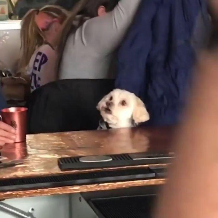 Watching 101 Dalmatians at a bar. – XD gif